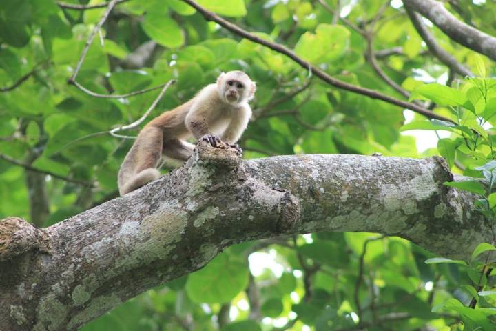 Beaches and Monkeys in Santa Marta